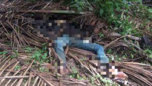 Ditemukan Mayat Membusuk di Kebun Sawit H. Nono di Bungo
