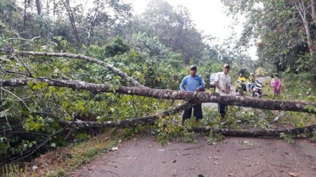 Hujan Angin, Pohon Tumbang Putuskan Aliran Listrik