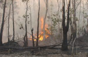 Ilustrasi Kebun Karet Terbakar