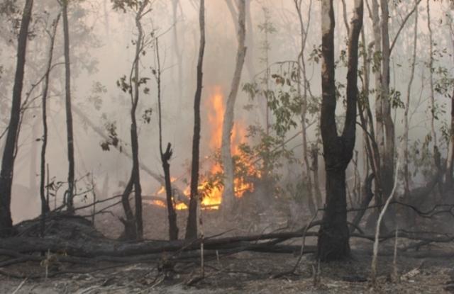 Photo of Api Lalap Kebun Karet Warga Rimbo Bujang