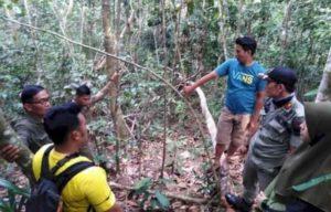 Tim BKSDA melakukan penjelajahan keberadaan Harimau Sumatera di Merangin. Foto: Brito.id