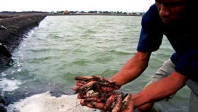 Photo of Toke Kuala Jambi Kecewa Ekspor Udang Nenek Dihentikan Terkait Virus Corona