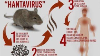Photo of Belum Usai Corona, Kini Muncul Virus Hanta yang Viral di Medsos