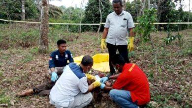 Photo of Penemuan Mayat Pria di Area Perkebunan Sarolangun