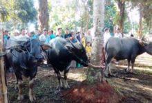 Photo of Tradisi Bantaian Adat Se-Tabir Raya Merangin Terancam Batal Karena Virus Corona