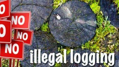 Photo of Oknum Polisi Divonis 1 Tahun Penjara Terkait Terlibat Illegal Logging di Tebo