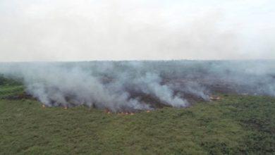 Photo of Kebakaran Hutan Ancam Muaro Jambi, Lahan HGU PT Kharisma Terbakar