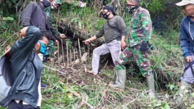 Photo of Petani di Kerinci Temukan Pohon Ganja, Anggota Kodim Langsung Sisir Lokasi