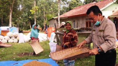 Photo of Singgah Nampi Beras di Betung Bedarah, Emak-emak: Bapak Ini Orang Dusun Jugo