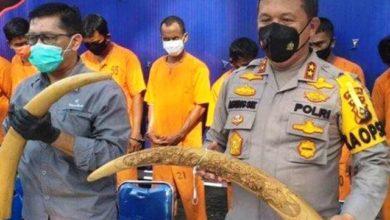 Photo of Oknum Guru Asal Jambi Ditangkap Polda Riau Terkait Jual Gading Gajah