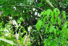 Photo of Macan Tutul Masuk ke Areal Pemukiman Warga Teluk Nilau